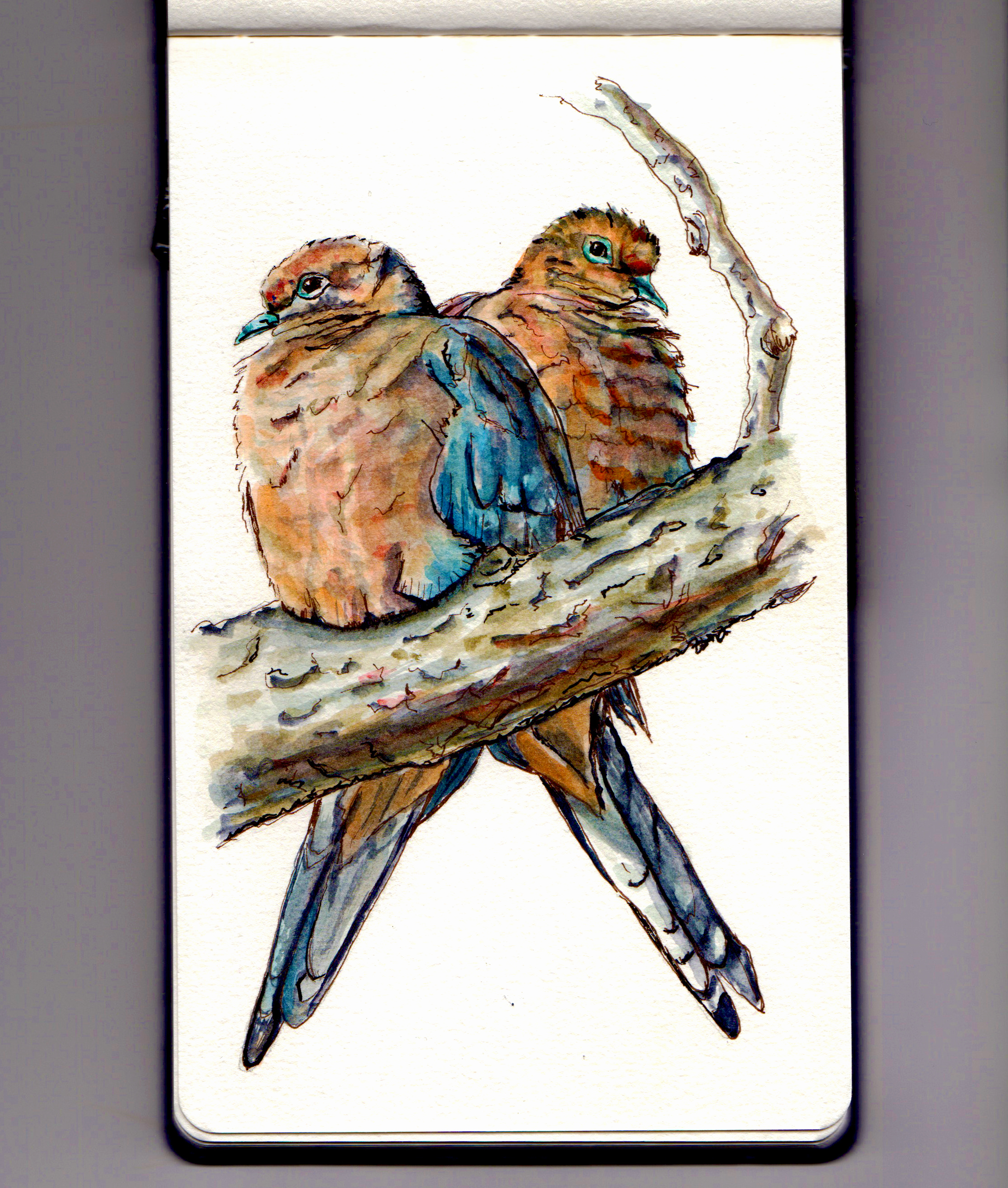 A Pair of Doves