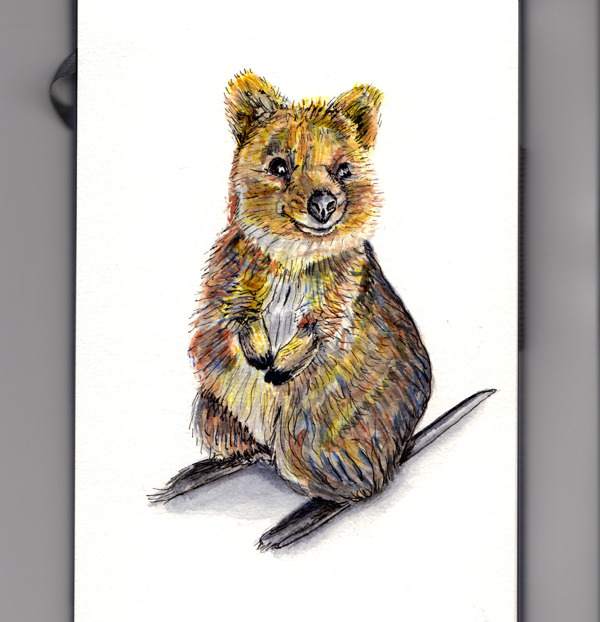 The Happy Quokka