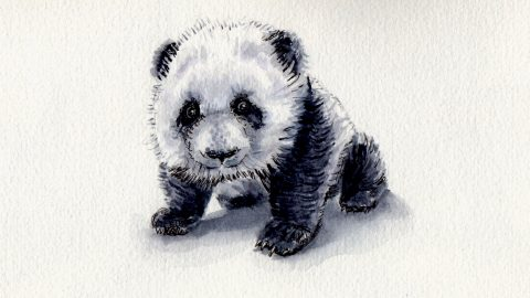 Tiny Little Panda