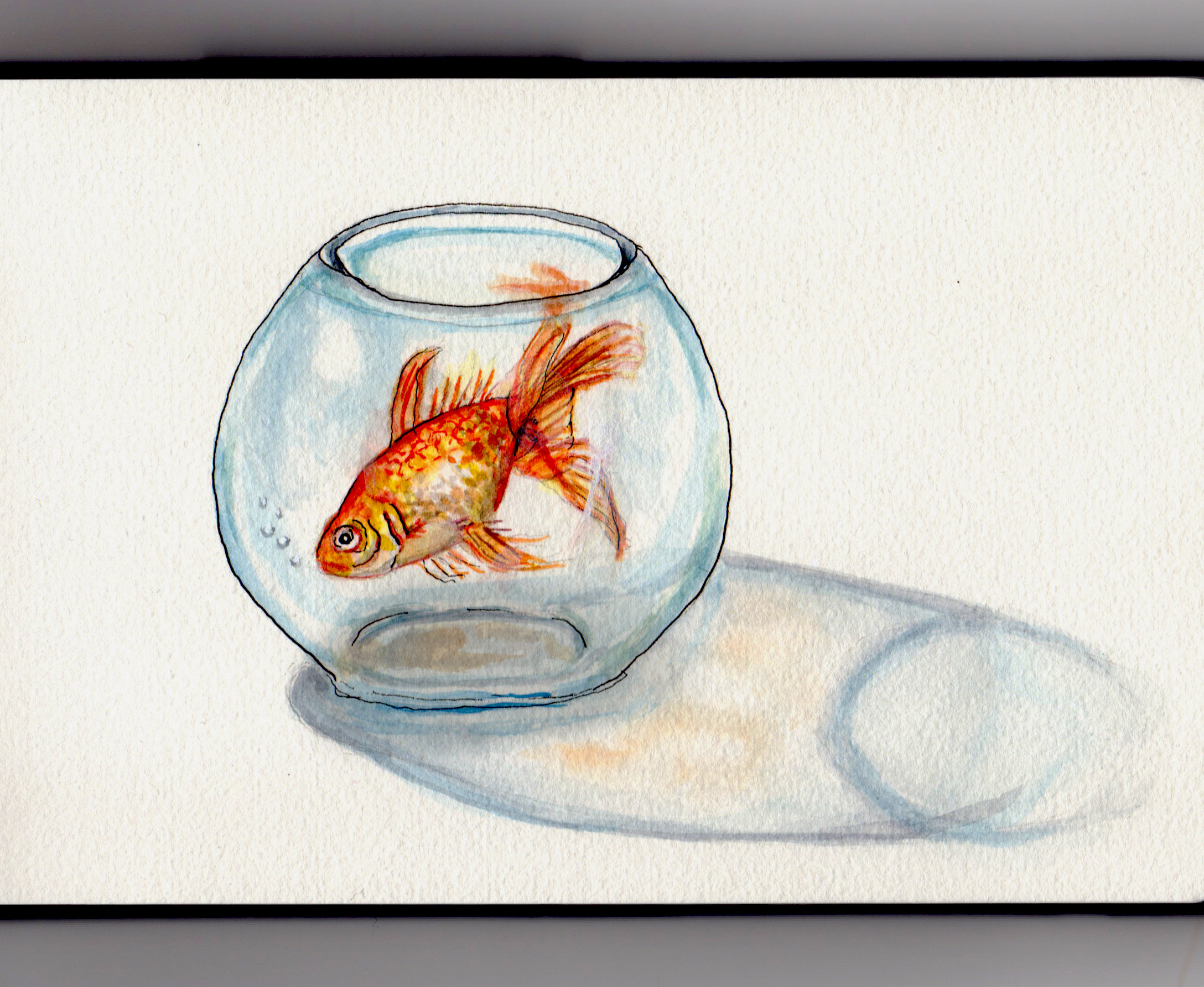 Doodlewash fish in a bowl for Fish in a bowl