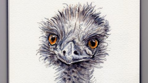 E is for Emu