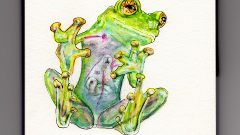 The Glass Frog