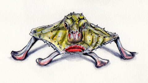 The Red-Lipped Batfish