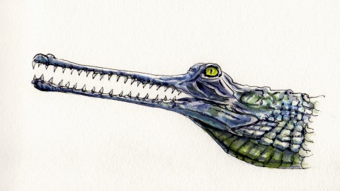 The Gavial