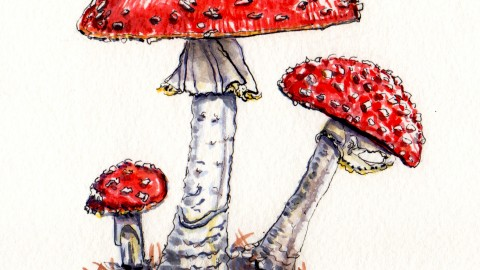 Sweet Little Toxic Toadstools