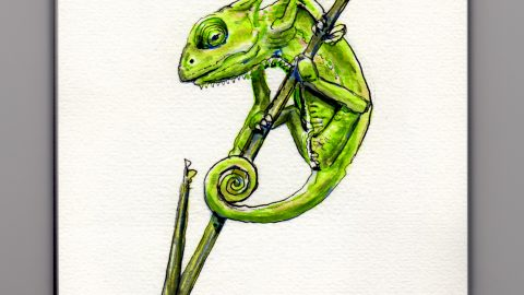 A Fragile Baby Chameleon