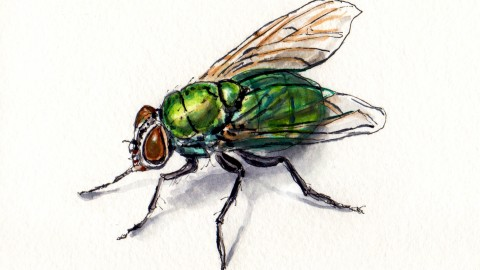 Return Of The Blow Fly