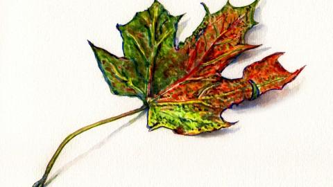 The Last Little Leaf