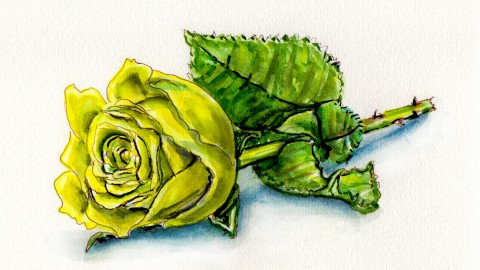 A Yellow Rose For Friends