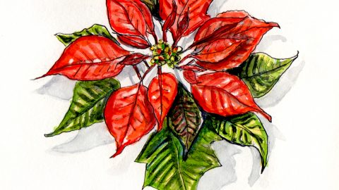 The Christmas Flower