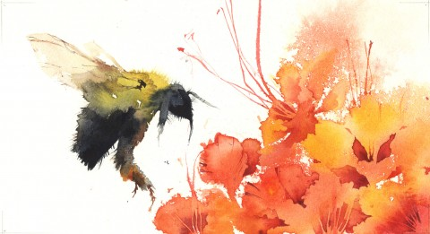 GUEST ARTIST: Watercolours by Kate