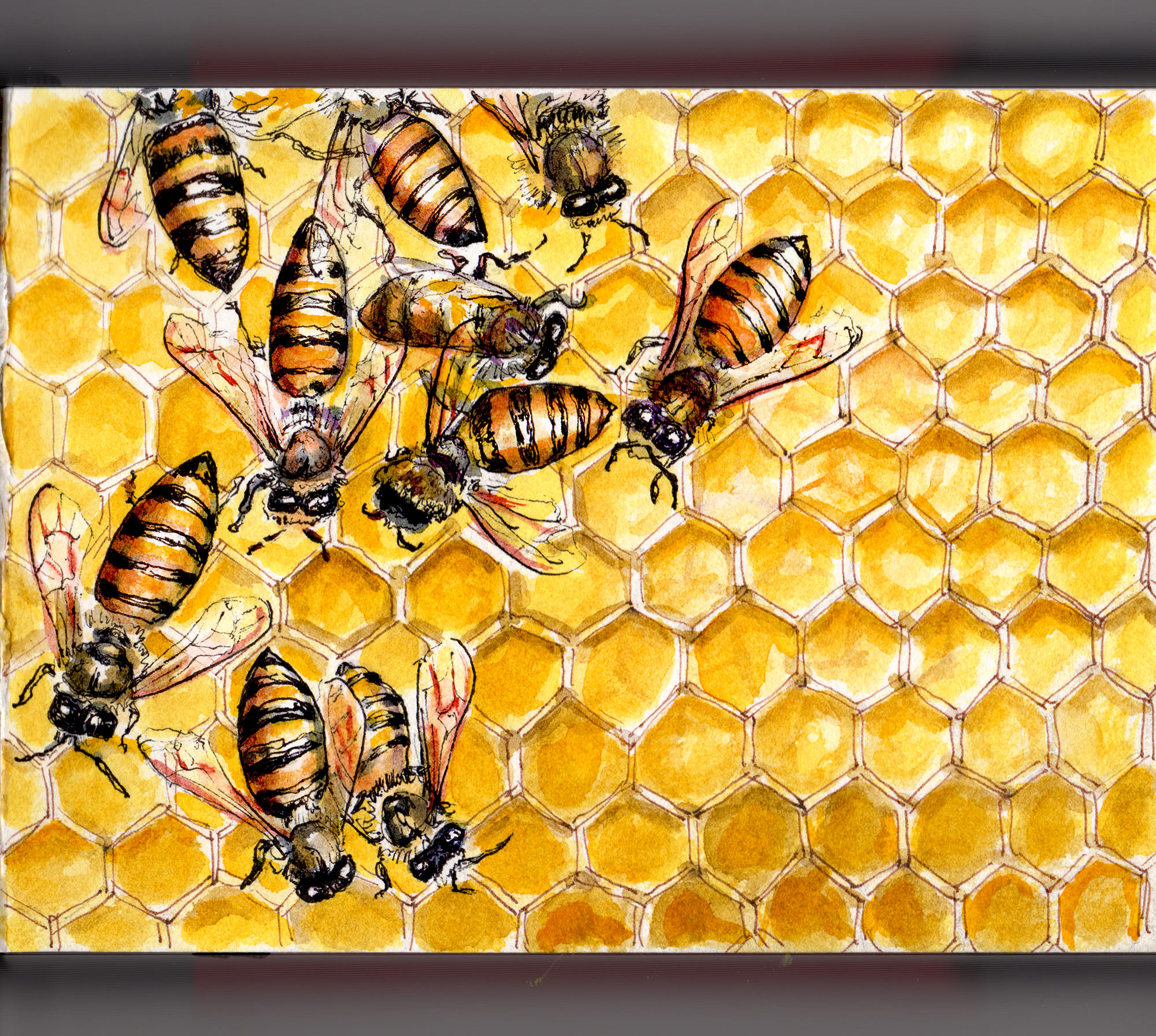 honey bees endangered - HD2000×1792