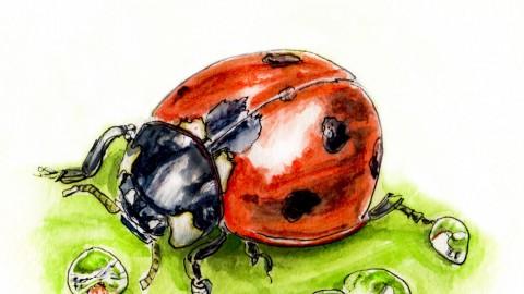 Do Ladybugs Get Thirsty?