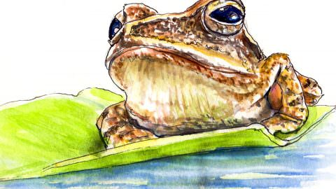 World Watercolor Month – Day 12 – A Frog At Sunset