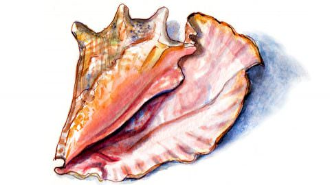 World Watercolor Month – Day 3 – The Lovely Sound Of The Ocean