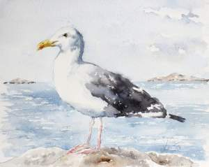 Seagull – Original Watercolor