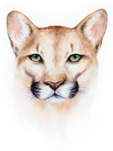 Mountain Lion – Watercolor Print [8×10]